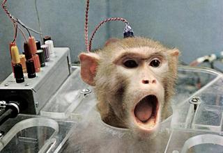 Berne-Pétition contre les expériences sur les primates