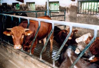 Statistiken zu den Strafverfahren 2010 im Tierschutzbereich