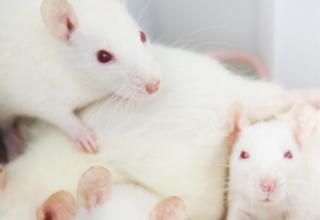 Statistiche 2014 sulla sperimentazione animale