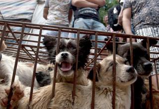 Stoppt das grausame Abschlachten von Hunden und Katzen am Festival von Yulin!