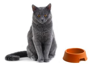 Petfood – Elenco di marche non testati sugli animali