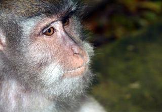 Esperimenti sulle scimmie rifiutati a Zurigo