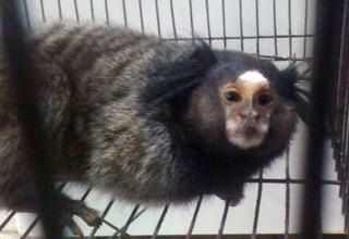 Sperimentazioni animali svolte su primati in Svizzera