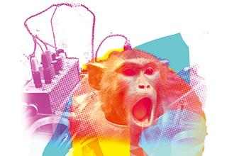 Università e ETH di Zurigo – Pietà per i primati