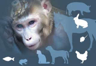 Journée internationale pour l'abolition de l'expérimentation animale