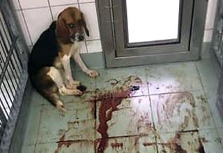 Ancora maltrattamenti sugli animali in un laboratorio tedesco