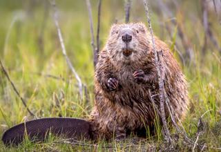 NON à la loi révisée sur la chasse