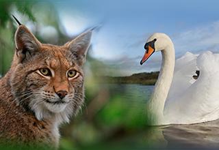 Loi sur la chasse refusée