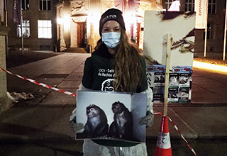 La campagne contre les expériences sur les singes continue!